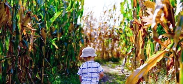 """""""Nach Herzenslust entdecken: Unser Urlaub auf dem Bauernhof mit Kleinkind"""", auf dem Krümel Blog"""